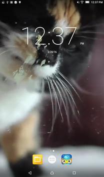 Cat Lick Screen Live Wallpaper poster