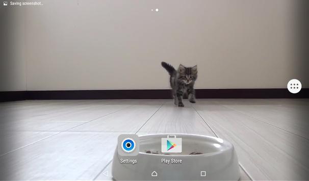 Kitty Live Wallpaper apk screenshot