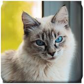 Cats wallpaper icon