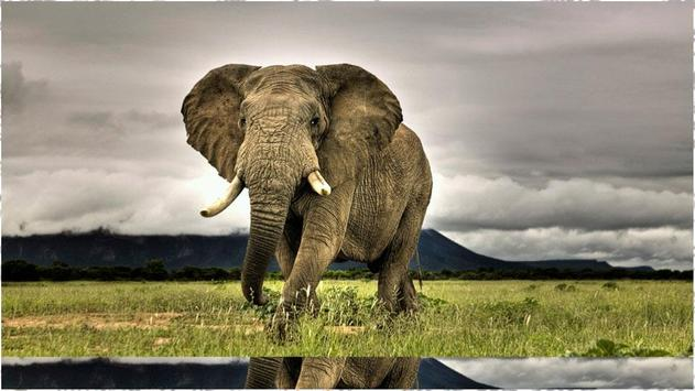 Elephant Backgrounds screenshot 2