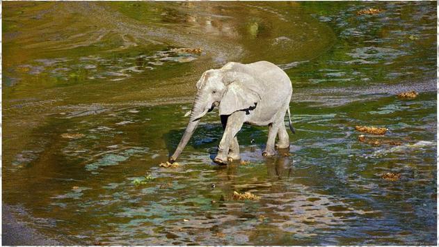 Elephant Backgrounds apk screenshot