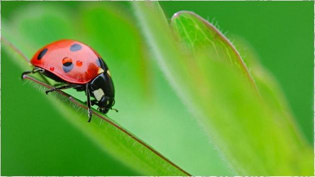Ladybug Wallpapers poster