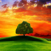 Stunning Nature Images icon