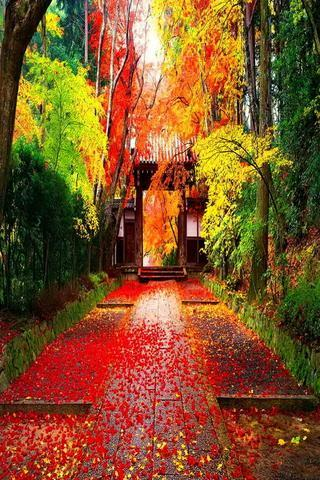 Autumn In Japan Wallpapers Hd For Android Apk Download