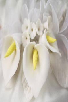Calla Lilly Wallpapers HD apk screenshot