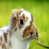 Bunny Wallpapers HD icon