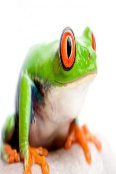 Frog wallpapers screenshot 4