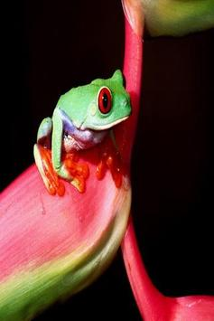 Frog wallpapers screenshot 6