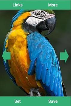 Parrots Wallpapers apk screenshot