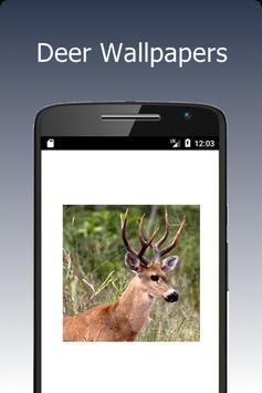 Deer Wallpapers poster
