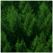 Forest Wallpapers icon
