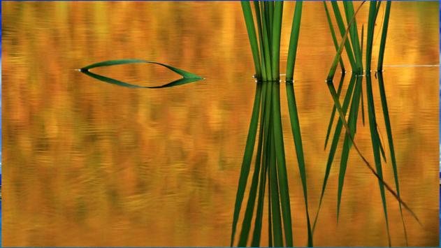 Reflection Backgrounds screenshot 1