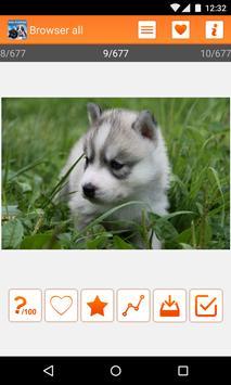 Puppies wallpapers HQ apk screenshot