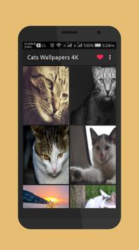 Cats Wallpapers 4K apk screenshot