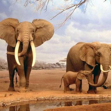 Elephants Wallpaper Poster Screenshot 1 2