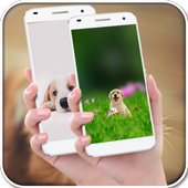 Funny Dog Wallpapers icon