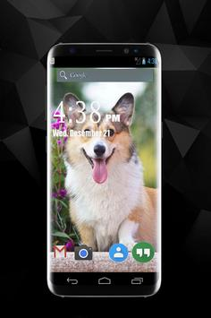 Funny Dog Wallpapers poster