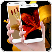 Beauty lily wallpapers icon
