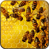 Bee Wallpapers 8K icon
