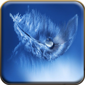 Macro Feather Wallpapers icon