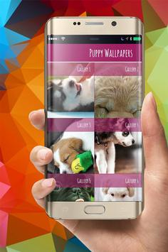 Cute Puppies Wallpapers poster