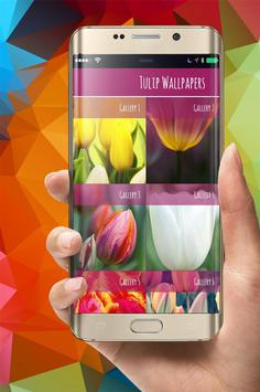 Tulip Wallpapers Flower poster