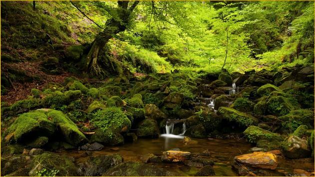 HD Forest Wallpapers screenshot 10