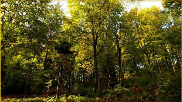 HD Forest Wallpapers screenshot 19