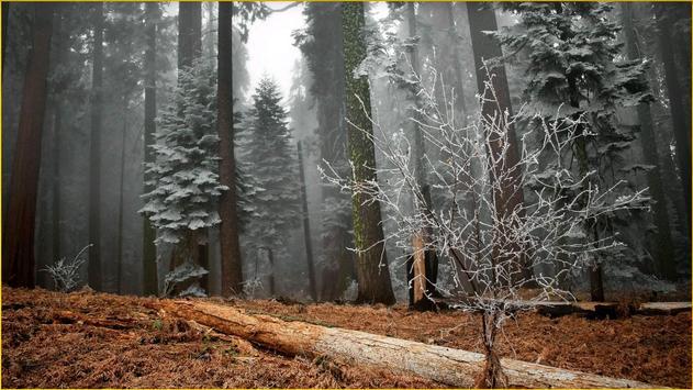 HD Forest Wallpapers screenshot 20