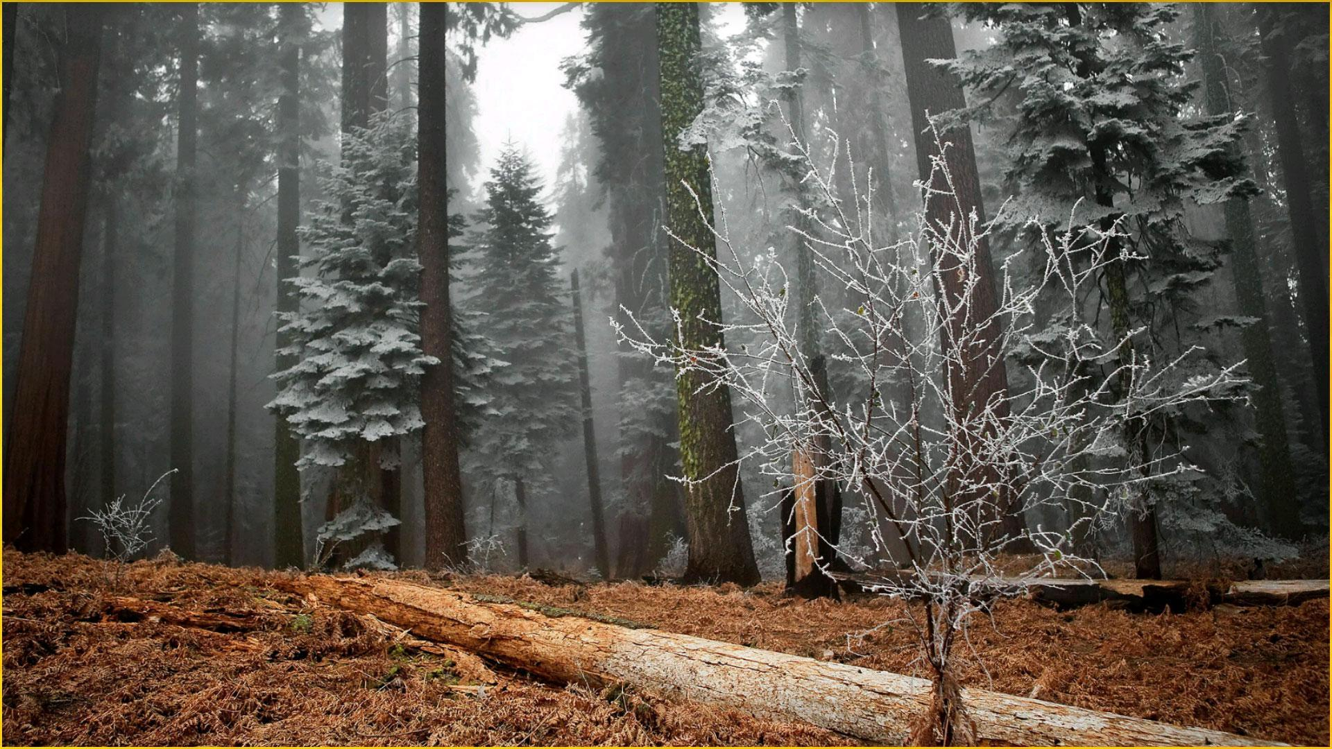 Hd Forest Wallpapers For Android Apk Download
