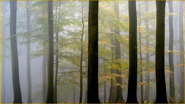 HD Forest Wallpapers screenshot 5