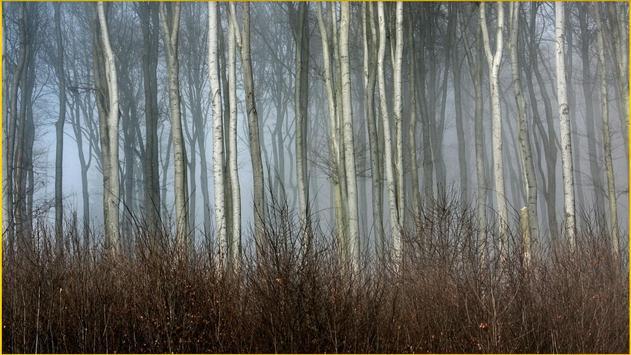 HD Forest Wallpapers screenshot 6