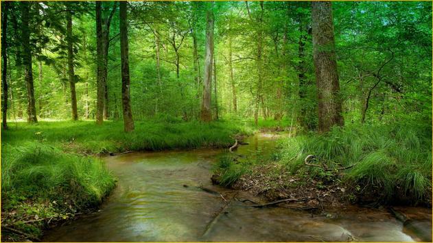 HD Forest Wallpapers screenshot 8