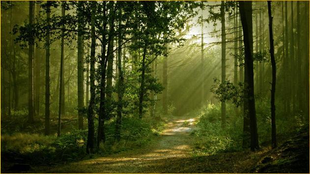HD Forest Wallpapers screenshot 9