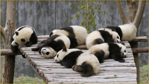 Panda Wallpapers screenshot 3