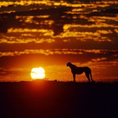 Africa Sunset Water LWP icon