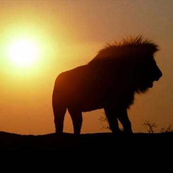 Africa Sunset Water LWP poster