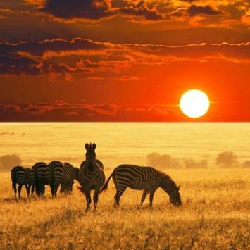Africa Sunset Water LWP apk screenshot