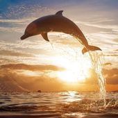 Dolphins Water LWP icon