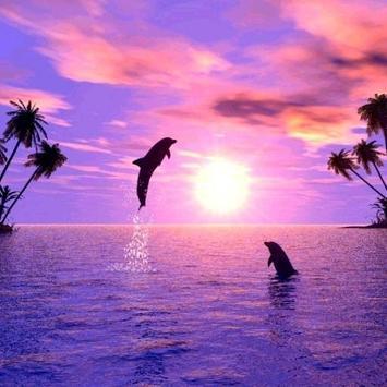 Dolphins Water LWP apk screenshot
