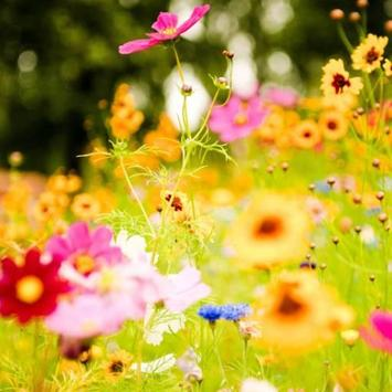 Flowers Water LWP screenshot 1