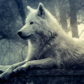 Wolves Water LWP icon