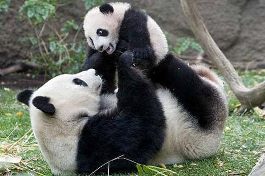 Panda Water LWP poster