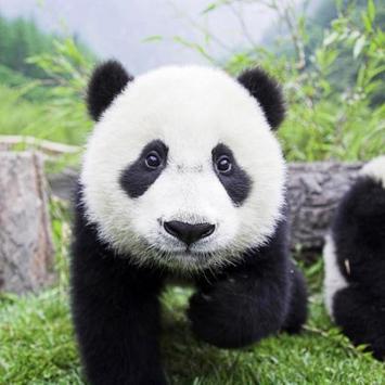 Panda Water LWP screenshot 1