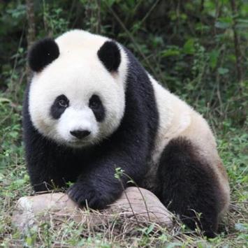 Panda Water LWP apk screenshot