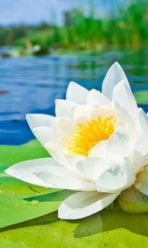 water lily live wallpaper poster