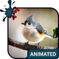 Birdy Animated Keyboard + Live Wallpaper