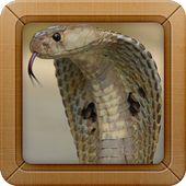 King Cobra Wallpapers Picture icon