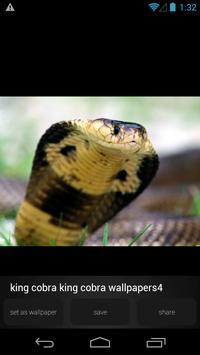 King Cobra Wallpapers Picture apk screenshot