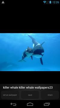 Killer Whale Wallpaper Picture screenshot 3